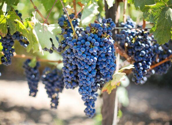 Branża winiarska podsumowuje rok lockdownu